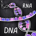 айМолекула: ДНК, РНК, Белки icon