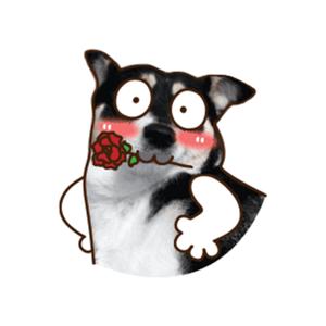 Maddy Husky - Fx Sticker app