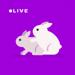 夜兔直播—视频秀场直播平台TV