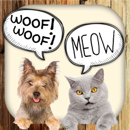 Animal Sounds – Dogs, Cats