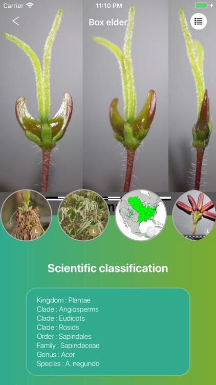 Deciduous trees screenshot-5