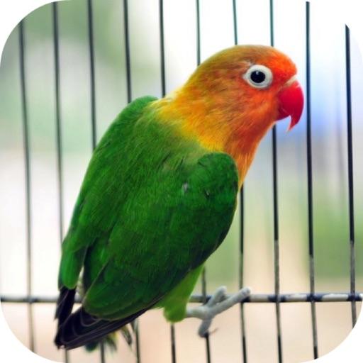 Parrot Escape The Castle-Birds Rescue