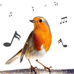 Bird Calls and Sounds Ringtones Free