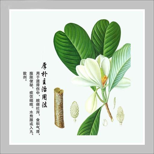 中草药图文宝典
