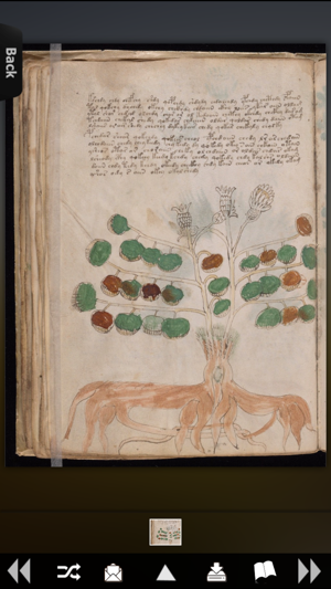 Full Voynich Manuscript Screenshot