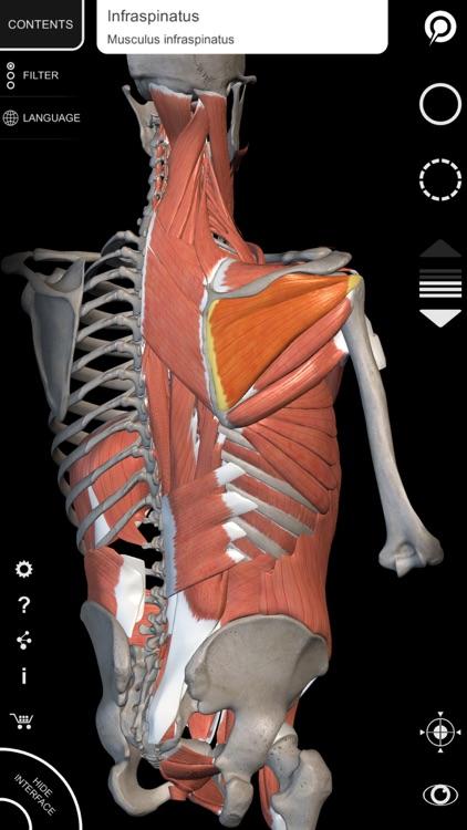Muscle | Skeleton - 3D Atlas of Anatomy screenshot-4