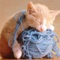 Cat Catch Wool Ball —— very cute game!