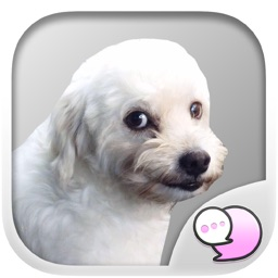 Buy me for my food : Mad dog Stickers for iMessage