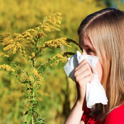 List of Allergens Guide!