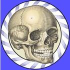 Speed Bones Lite (Quiz) icon