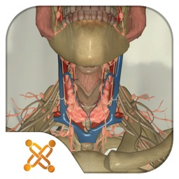 USCAP Thyroid Biopsy Sim