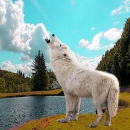 Wild Wolf Peril Hunting: Sniper Lynch Shooting