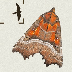 Field Guide to the Moths of Britain & Ireland