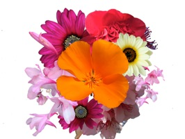 Flower Stickers 花貼紙