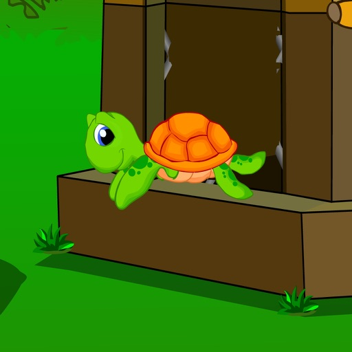 223 Forest Turtle Rescue