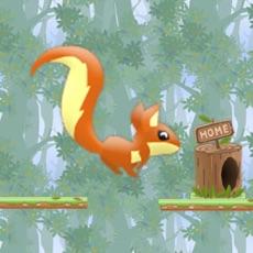 Activities of Nut rush!