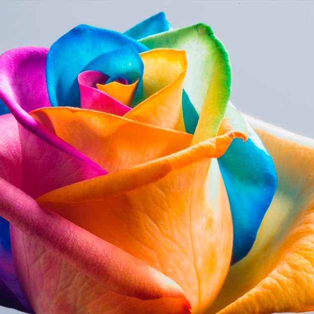 Flower Hd Wallpapers Images: Floral & Flower Backgrounds On The App