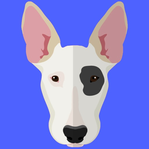My Bull Terrier
