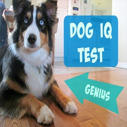 Guide for Dog Breeds IQ Test