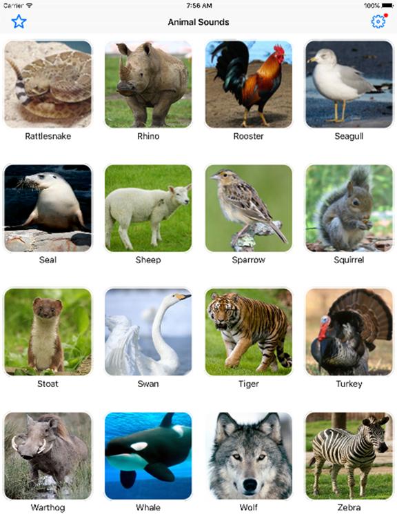 Animal Sounds Pro Farm Jungle Voices for Kidsのおすすめ画像1