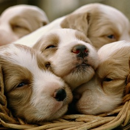 Cute Puppy Wallpapers | HD Backgrounds