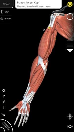 Muskeln | Skelett - 3D Atlas der Anatomie im App Store