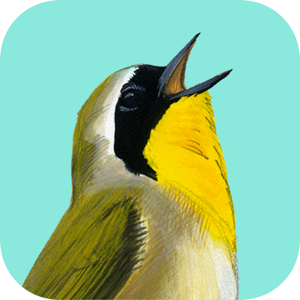 Song Sleuth: Auto Bird Song ID w/David Sibley Info app
