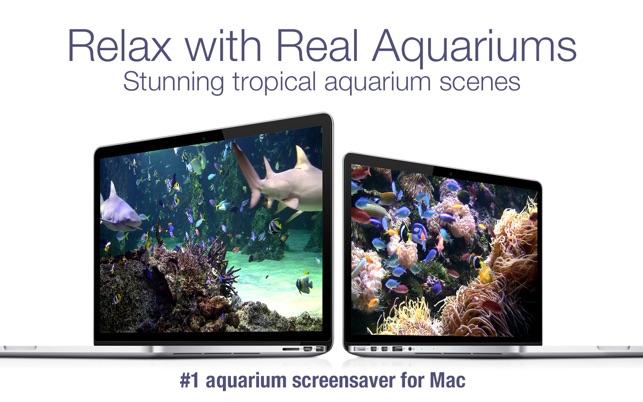 Aquarium Live HD screensaver on the Mac App Store
