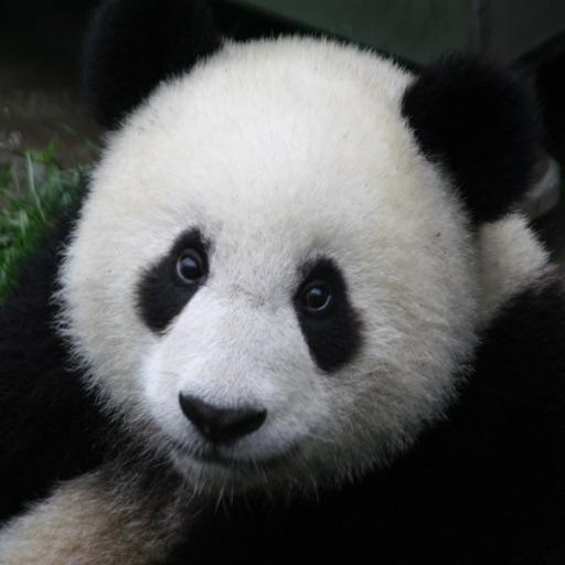 iLiveMath Animals of Asia
