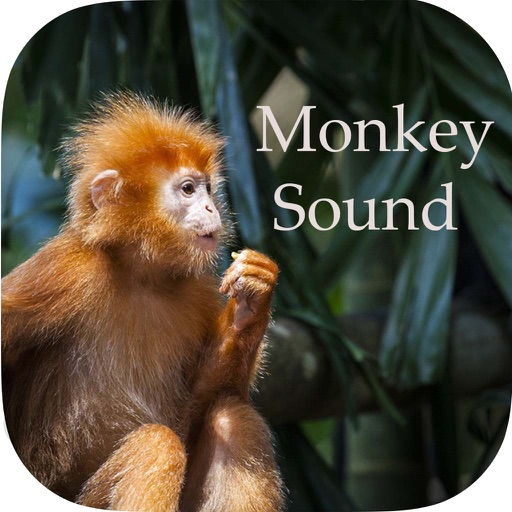 Monkey Sounds - Funny Sounds for kid
