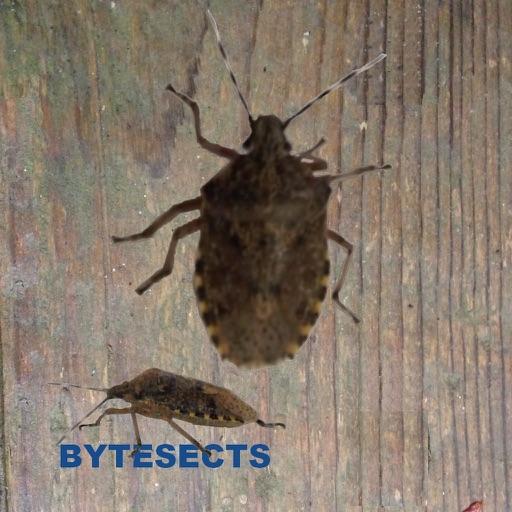 Bytesects раздавить реальные насекомых муравьи пауки Игра и заставки Детские игры