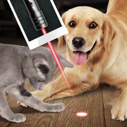 Laser for Home Animal Joke