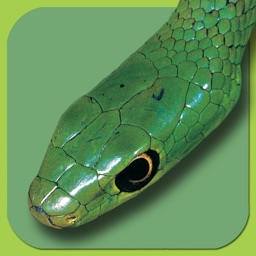 eSnakes of Southern Africa LITE