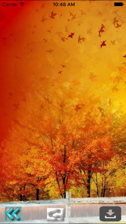 First Day Fall - Autumn HD Wallpapers