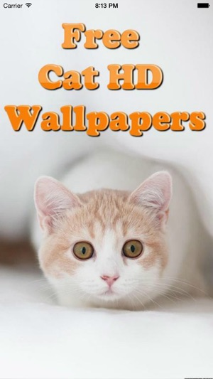 Cute Cats Wallpapers Hd Best Kitty Backgrounds On The App Store