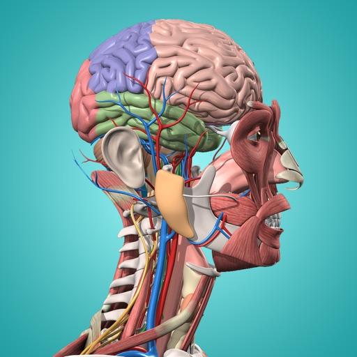 Anatomy & Physiology - anatomy of human body parts