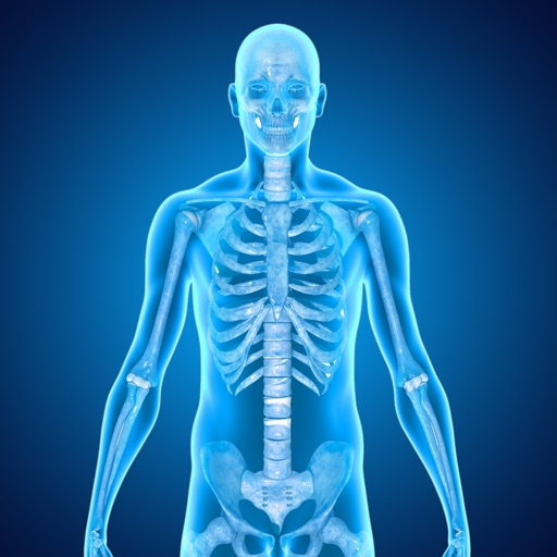 Skeletal System Medical Terms