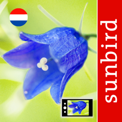 Wilde Bloemen Id NL