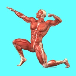Muscular System Quizzes