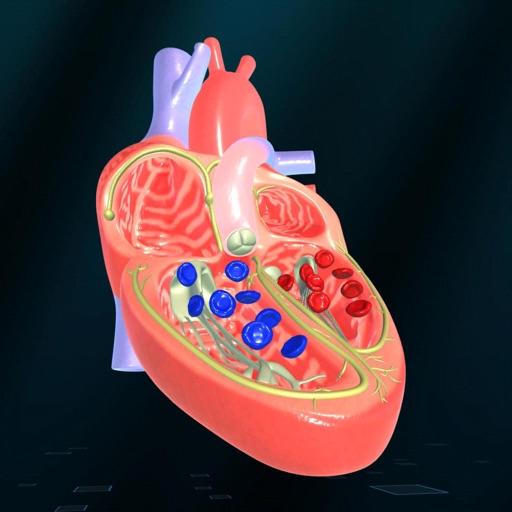 Heart - An incredible pump