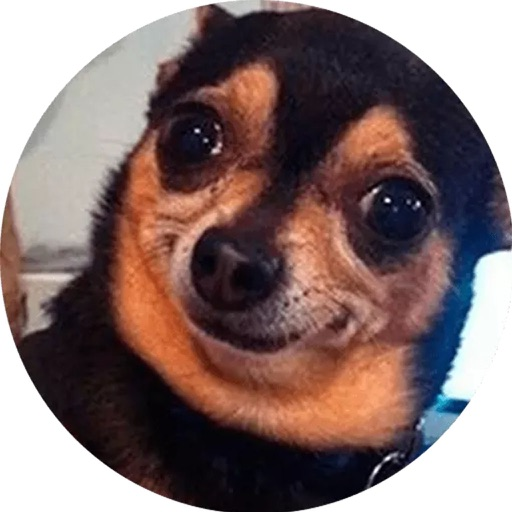 Best Dog Stickers HD for Chat