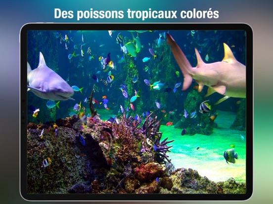Screenshot #6 pour Aquarium Live HD +