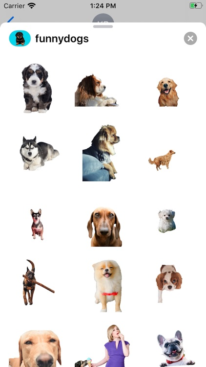 Dog Expressions
