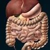 3D内臓(解剖学) - iPadアプリ