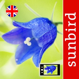 Wild Flower Id British Isles