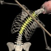 Posture by Muscle & Motion