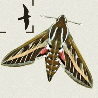 Codes for Moths of Britain & Ireland Hack