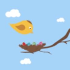 Activities of Feeding Birds
