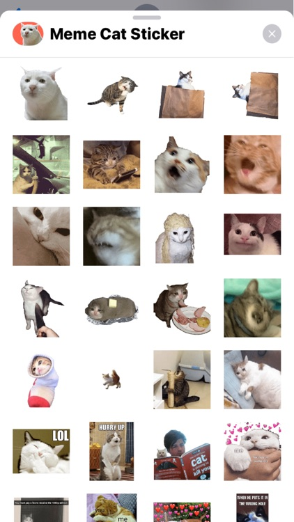 Cat Meme Stickers screenshot-4