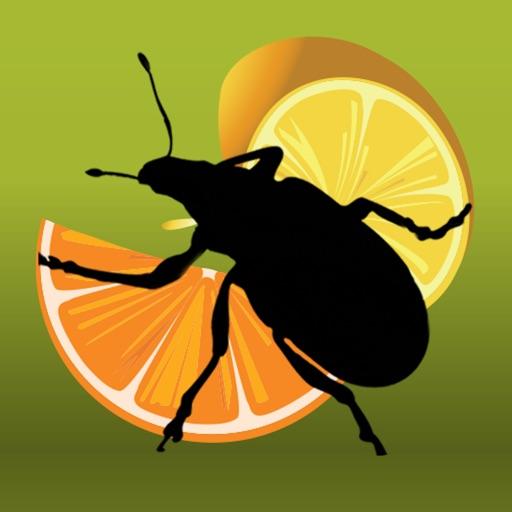 Citrus Pests Key
